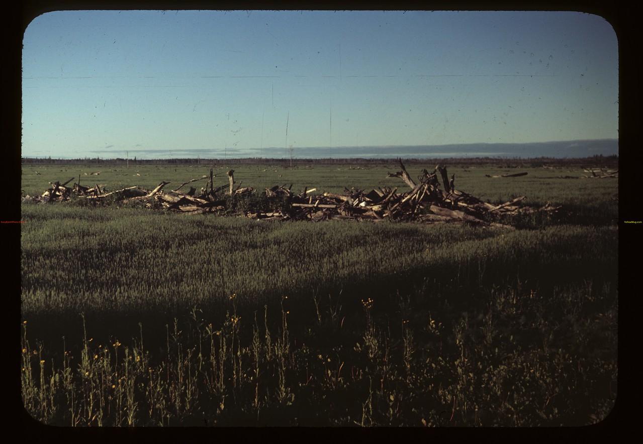 Brush piler windrows - Carrot River co-op farm. Carrot River 07/18/1949