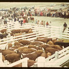 Consul Calf Club show and sale	 Consul	 05/31/1949