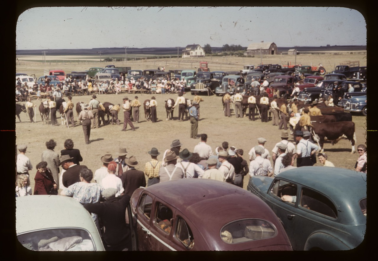 Double line-up Calf Club show & sale. Aneroid. 06/08/1949