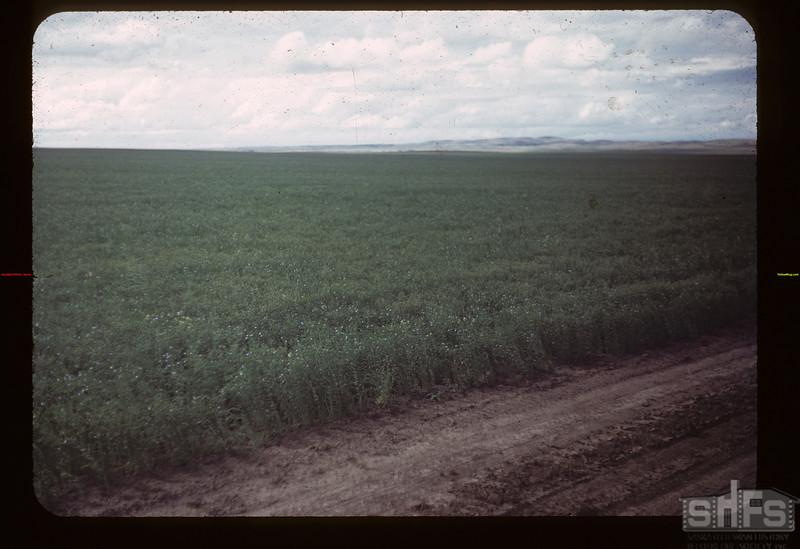 Matador Co-op Farm flax Matador 07/27/1949