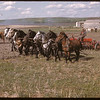 Rene Proulx and 8 horse One Way. Prudhomme<br /> 06/07/1947