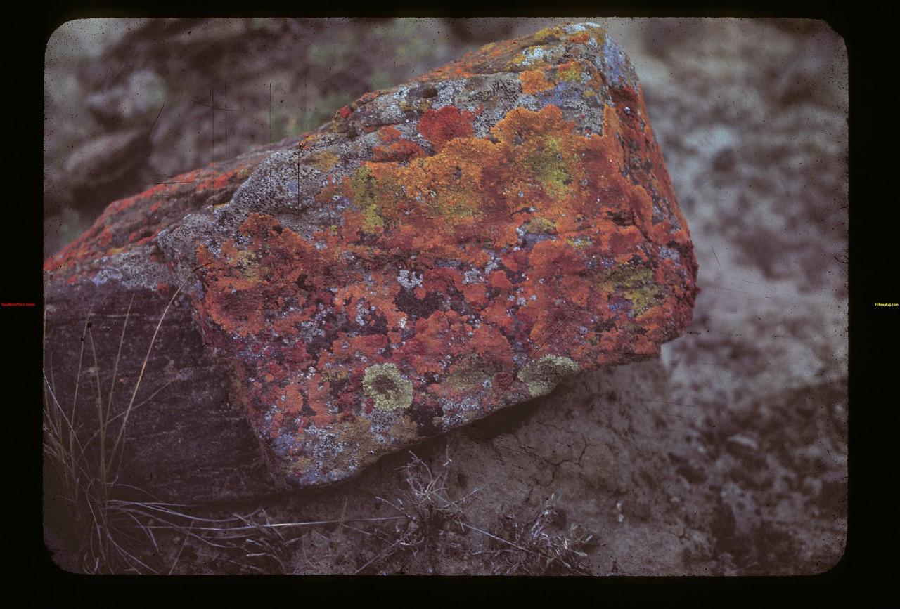 Rock Creek Canyon. Rock & Moss Killdeer 08/30/1942