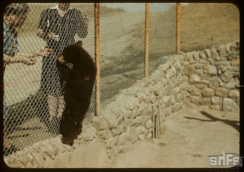 """Poor Bobby Bear"" - Moose Jaw Wild Animal Park.	 Moose Jaw	 08/20/1943"