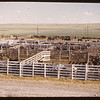 Co-op Horse Plant - Horse yards.	 Swift Current.	 07/04/1946