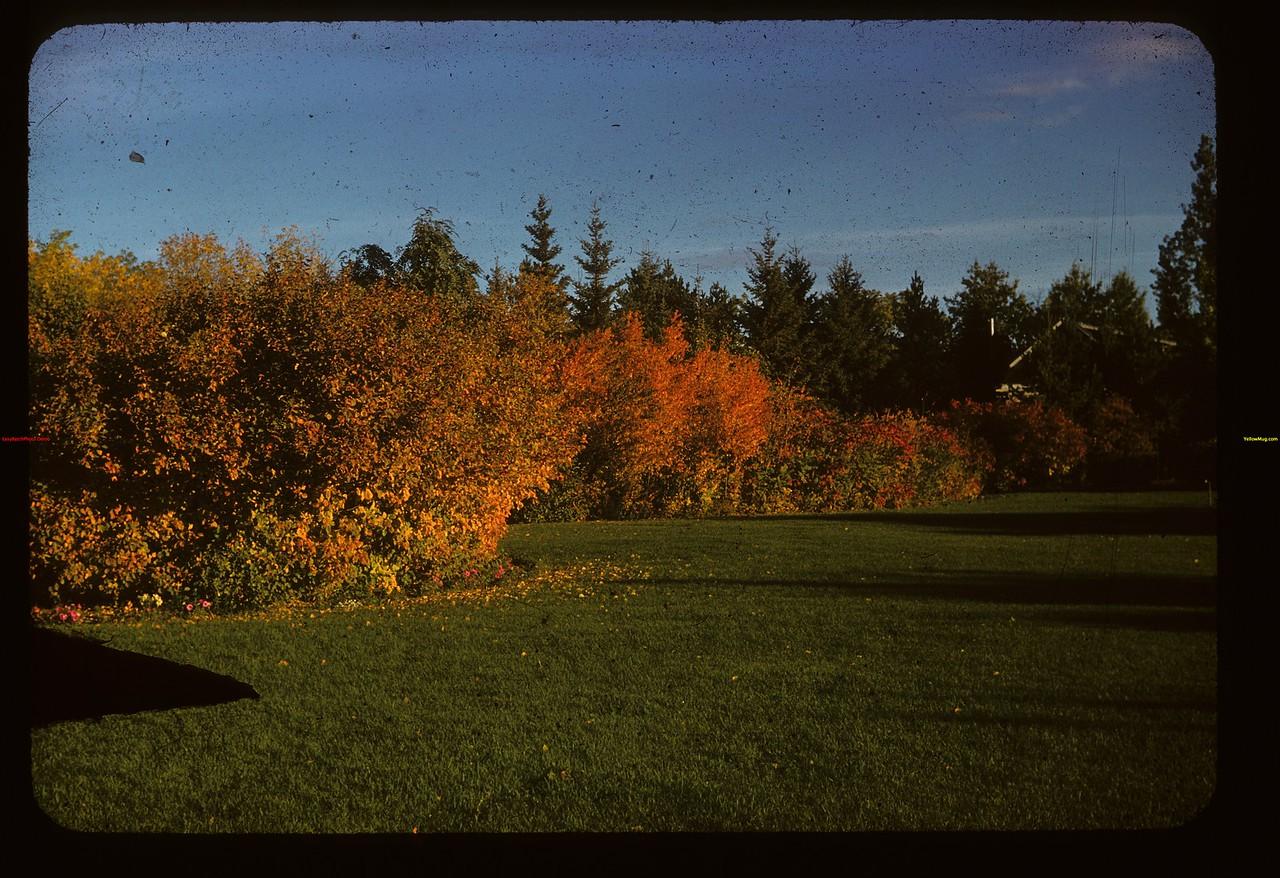 Morning color. School yard Lloydminster 09/17/1946