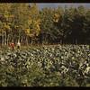 Garden  - Hoerta & Verner Brightsand 09/08/1944