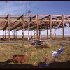 Dismantling North Battleford Airport.  North Battleford.  10/06/1946