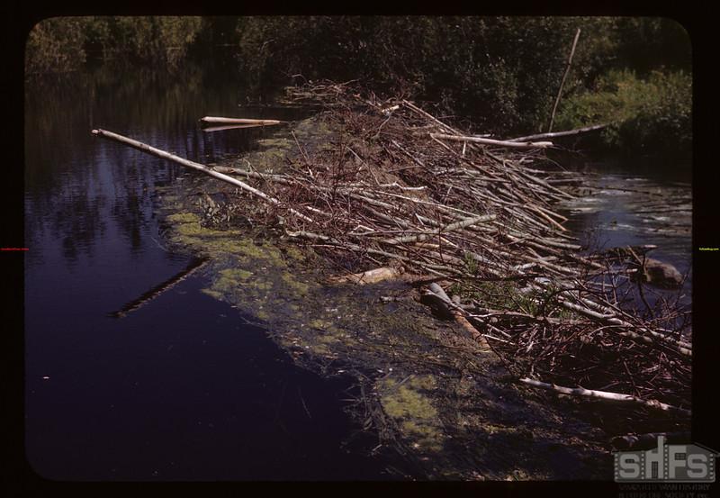 Beaver dam in Deer Creek Deer Creek 08/15/1945