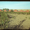 D. J. McCuaig's orchard and graineries.	 Eastend	 08/28/1942