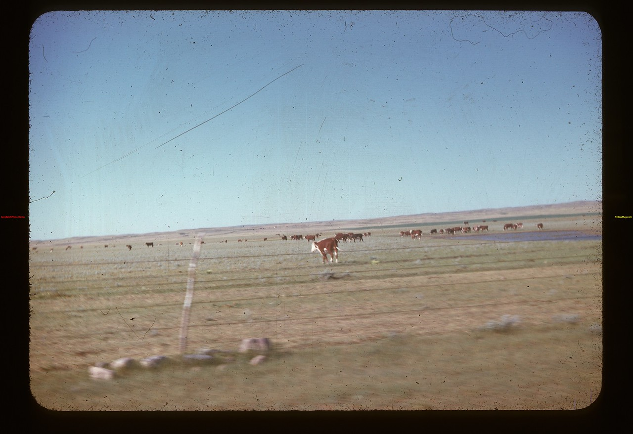 Old Matador Ranch of Matador Co-op Farm Matador 07/16/1947