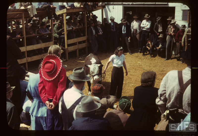 After the calf club show & sale. Eastend 06/01/1949
