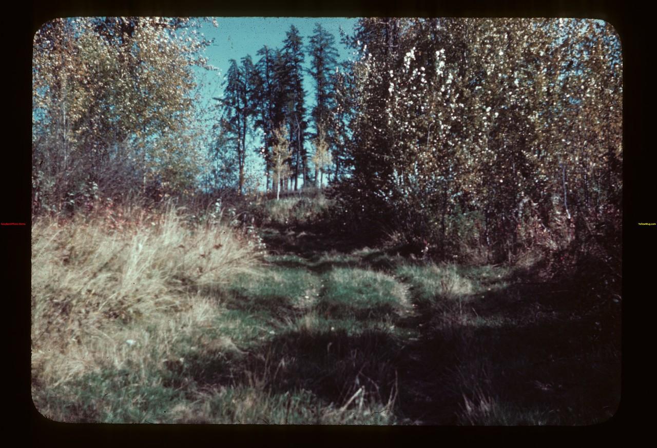Jackpine south of Beaver Bridge - Meadow Lake to Goodsoil Goodsoil 09/23/1944