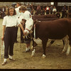 Dorothy Jones and light weight champion calf	 Consul	 05/31/1949