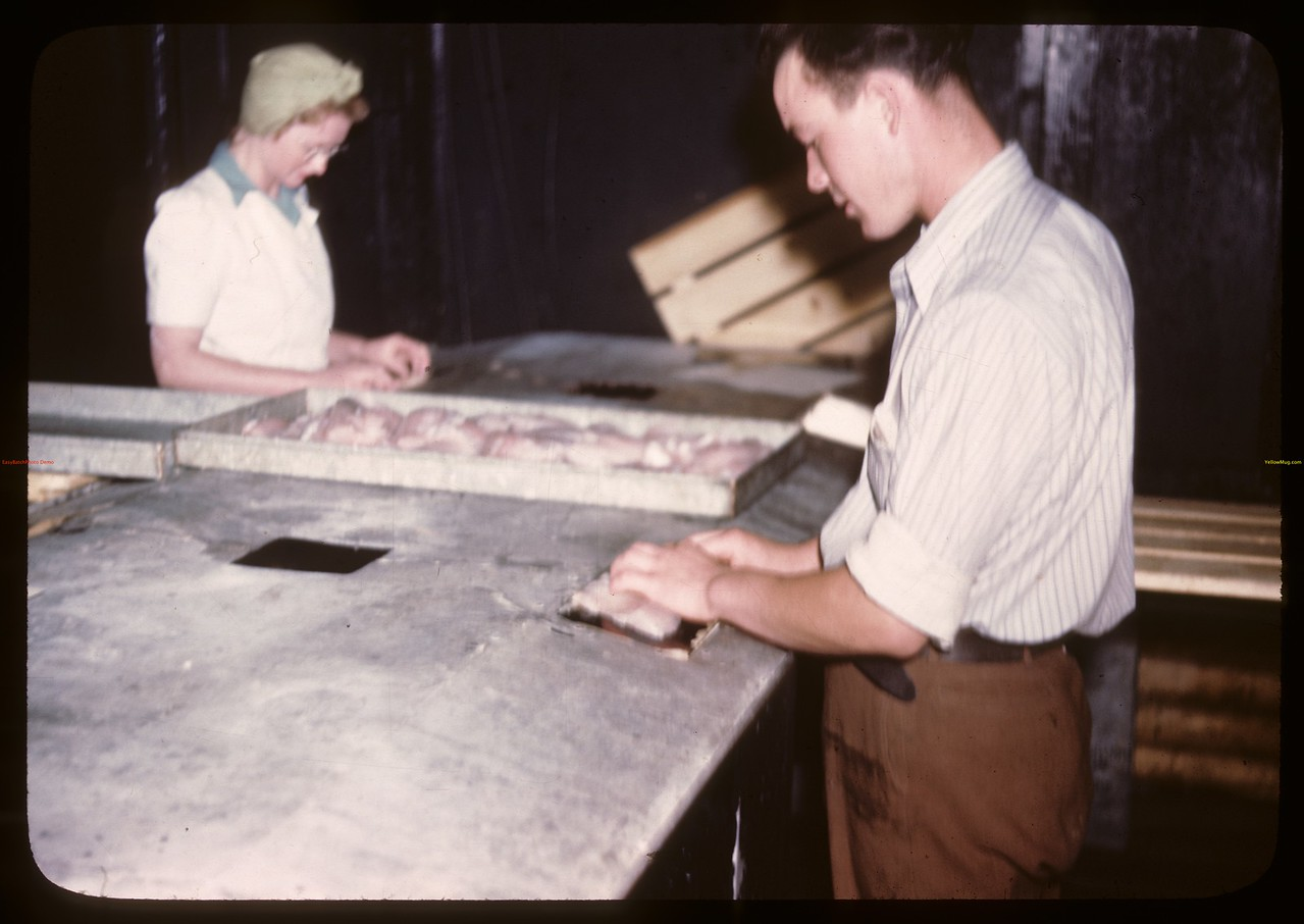 Candling fillets - Beaver Lake filletting plant 15 miles from Flin Flon.	 Beaver Lake.	 06/21/1946