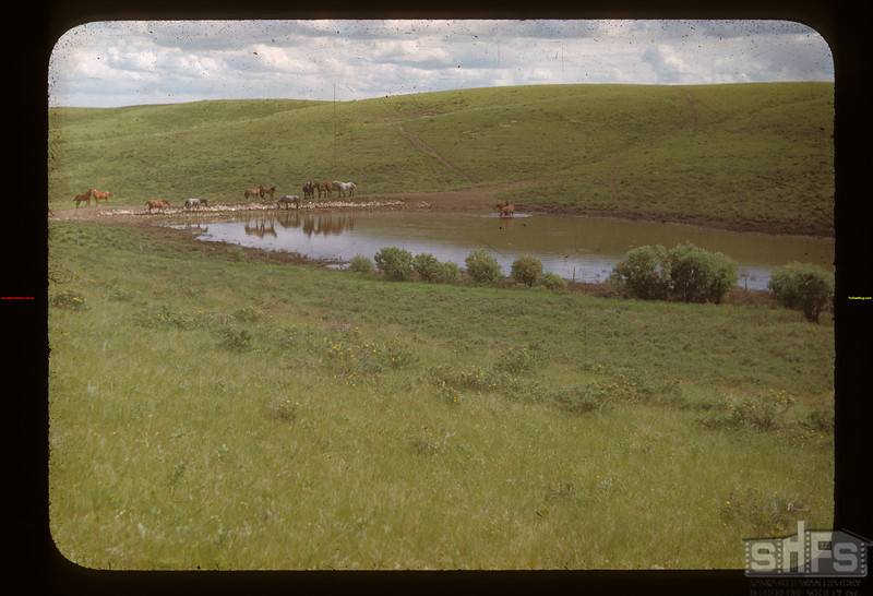Dam in Cypress Hills. N of E.	 Eastend	 06/25/1948