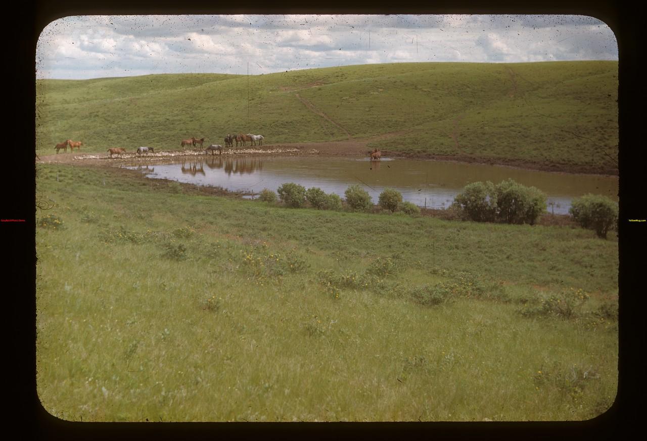 Dam in Cypress Hills. N of E. Eastend 06/25/1948