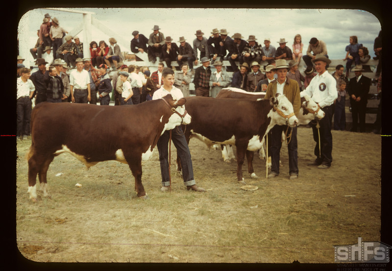 Some good calves - Floyd Pelkey and Donald Schwindt Consul 05/31/1949