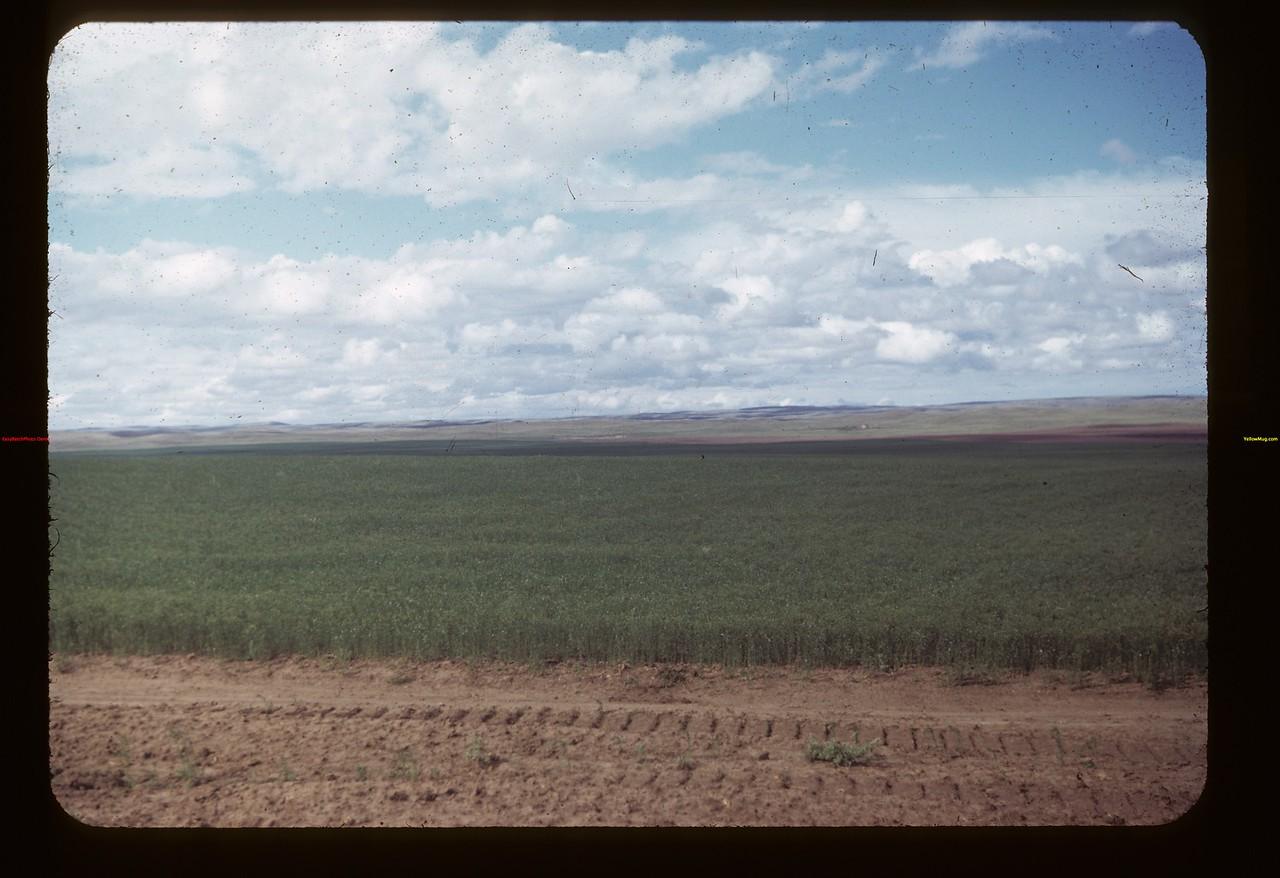 Matador Co-op Farm Matador 07/27/1949