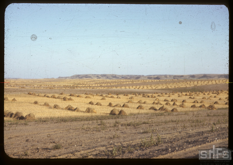 Stooks and strip farming.	 Willow Bunch.	 09/17/1942
