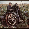 Harvesting 65 acres of hybrid corn.  North Battleford.  09/21/1944