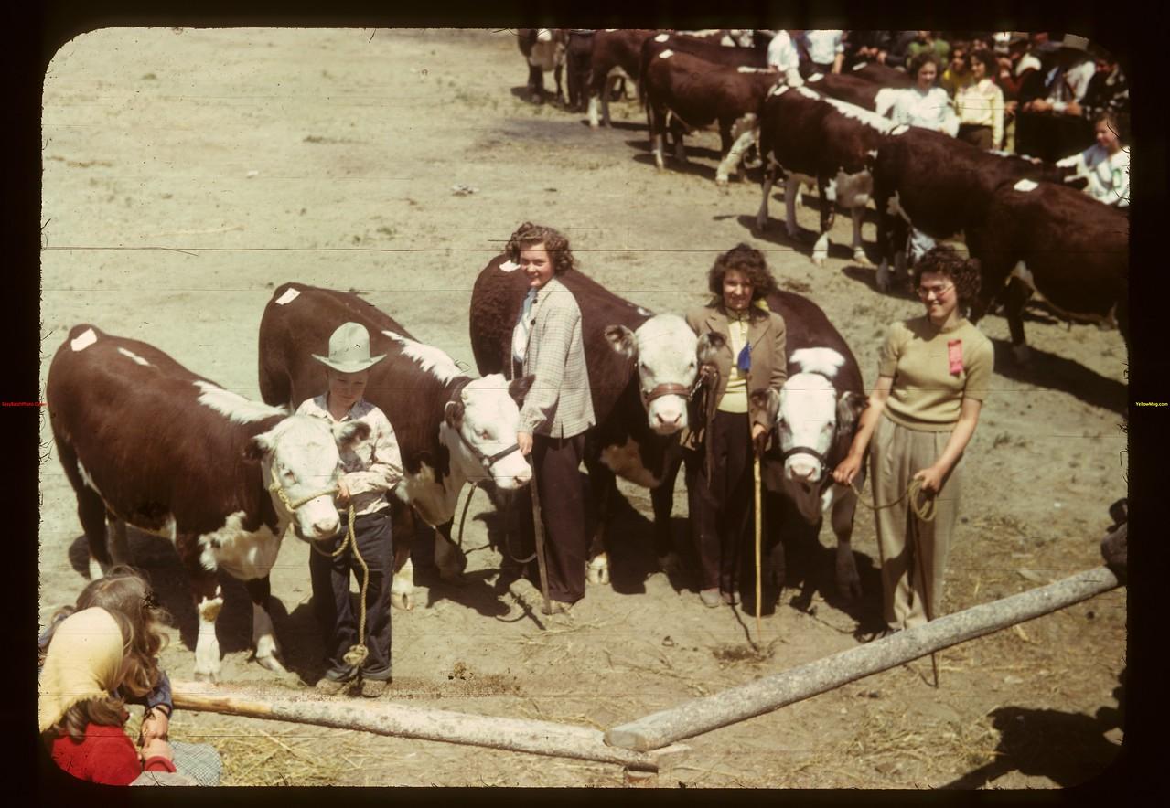 Eastend Junior Calf Club. Eastend 06/01/1949