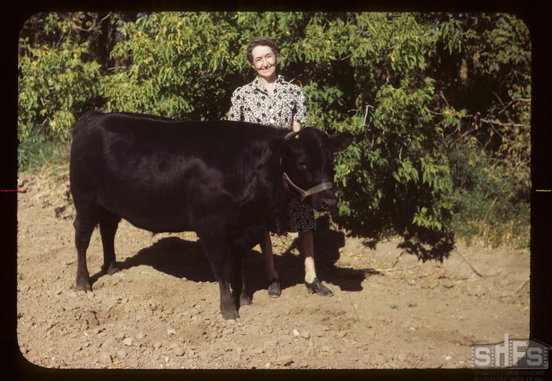 Mrs Bob Gray and Harold's Grand Champion Calf Crichton 06/05/1949