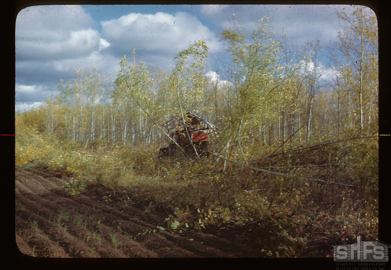Like matchwood - brush cutting  - Naicam to Melfort Melfort 09/25/1946