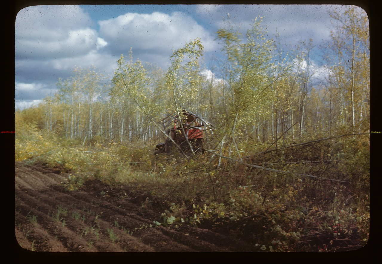 Like matchwood - brush cutting  - Naicam to Melfort	 Melfort	 09/25/1946