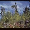 Looking E. up Hill S. E. Ry Grade Loon Lake 09/05/1944