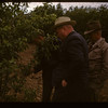 Irwin Studer 150 apple grafts	 Lac Pelletier	 06/20/1947