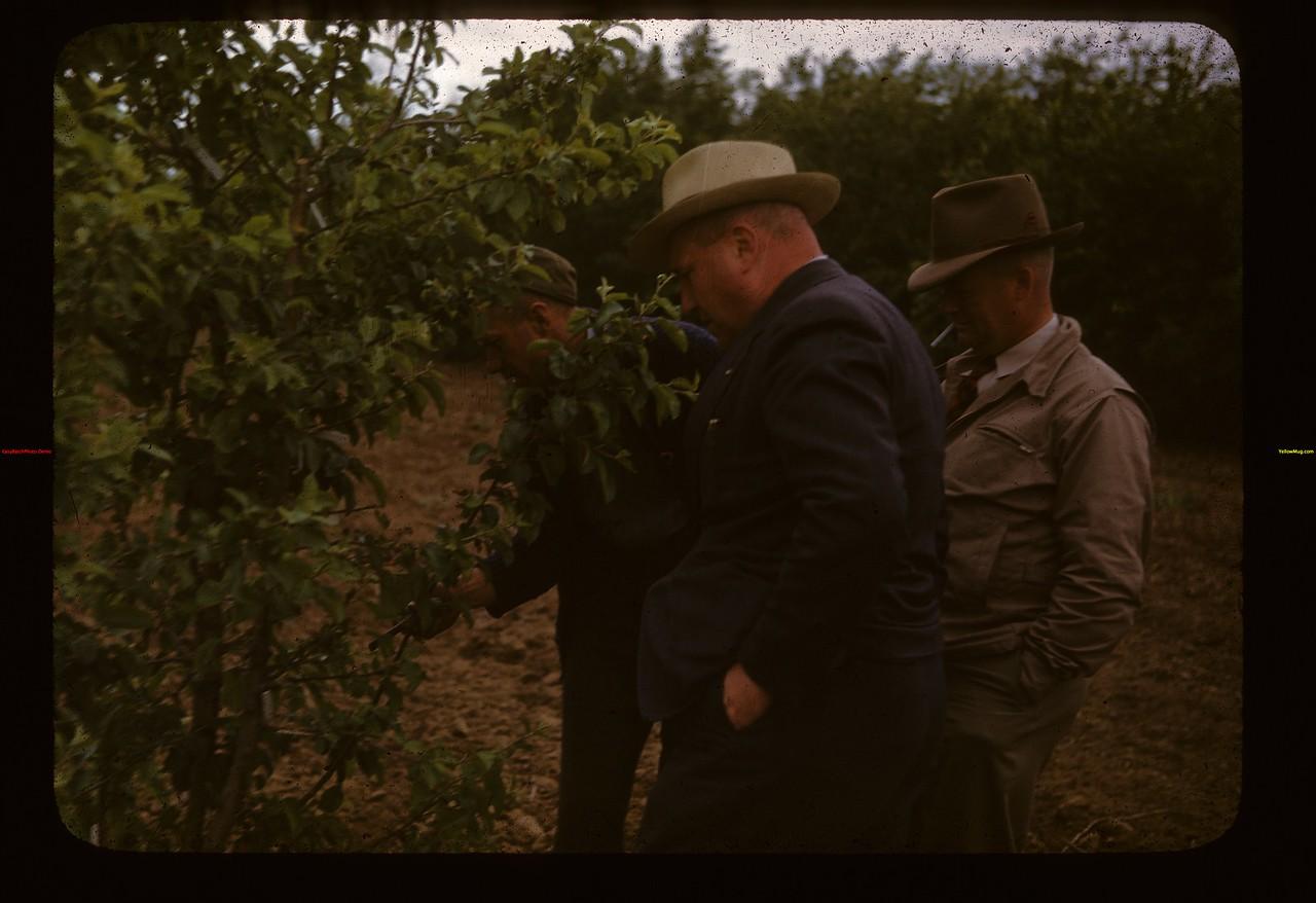 Irwin Studer 150 apple grafts Lac Pelletier 06/20/1947