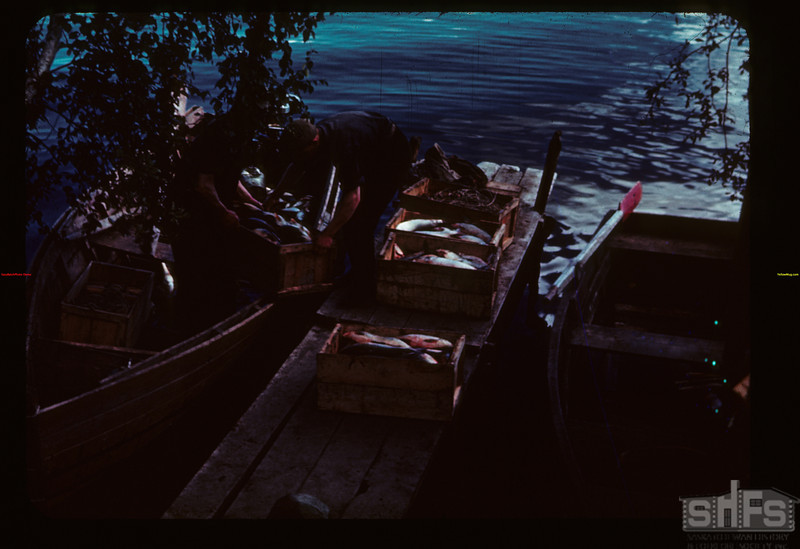 Bringing in the catch S. W. fish camp Loon Lake 08/22/1944