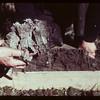 Horizontal cleavage - A2 horizon Loon River 09/23/1944
