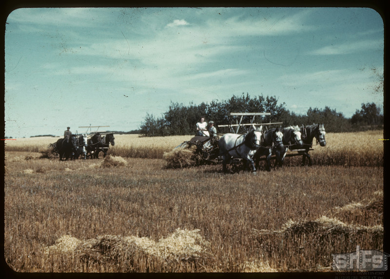 The Clarence Links harvesting oats. [Corning is just west of Moose Mountain].	 Corning.	 09/18/1942