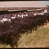 Boharm Jr. Calf Club - Moose Jaw Fair.	 Moose Jaw	 07/02/1947