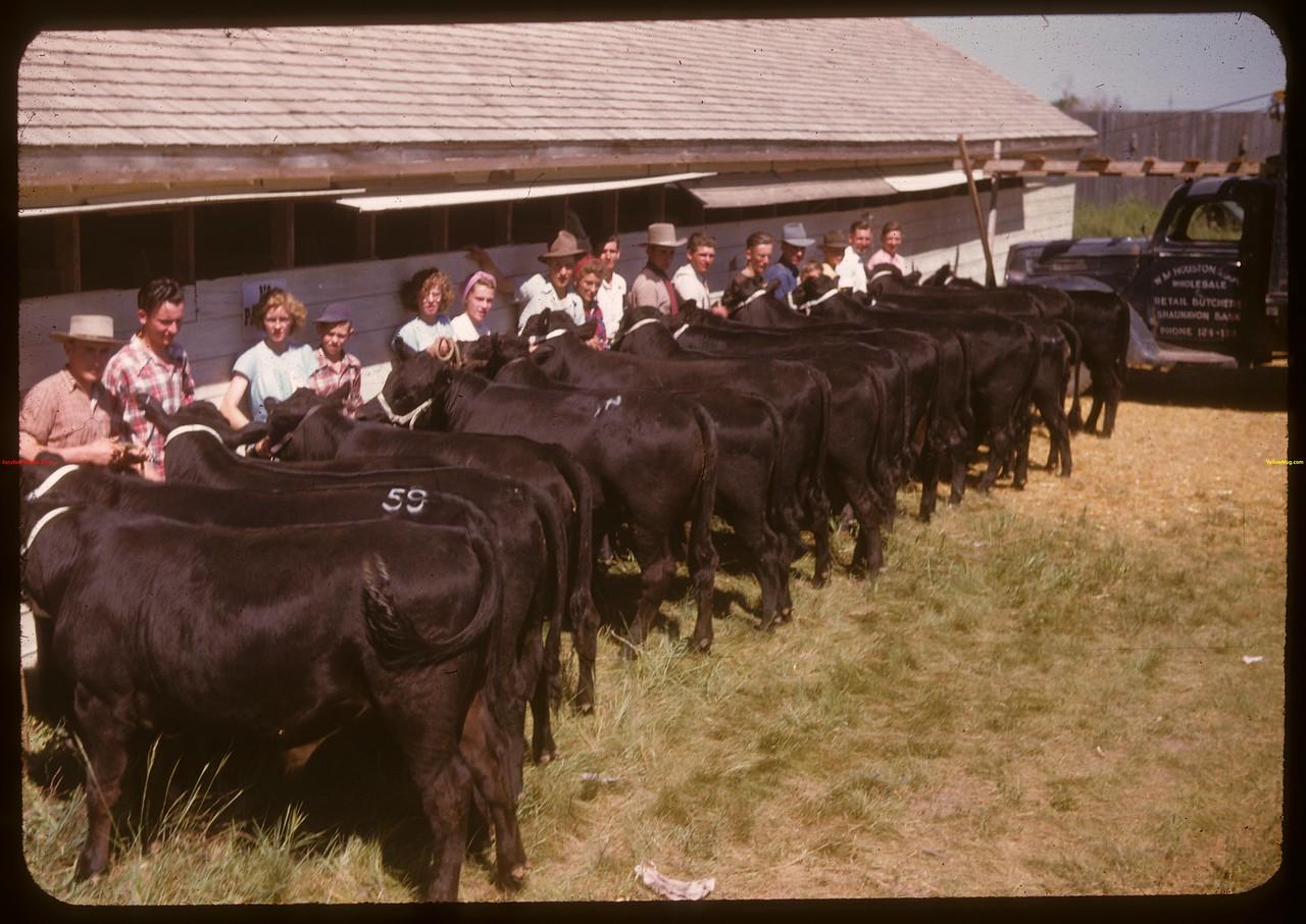 Boharm Jr. Calf Club - Moose Jaw Fair. Moose Jaw 07/02/1947