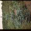 Irwin Studer Blue Spruce Lac Pelletier 06/20/1947