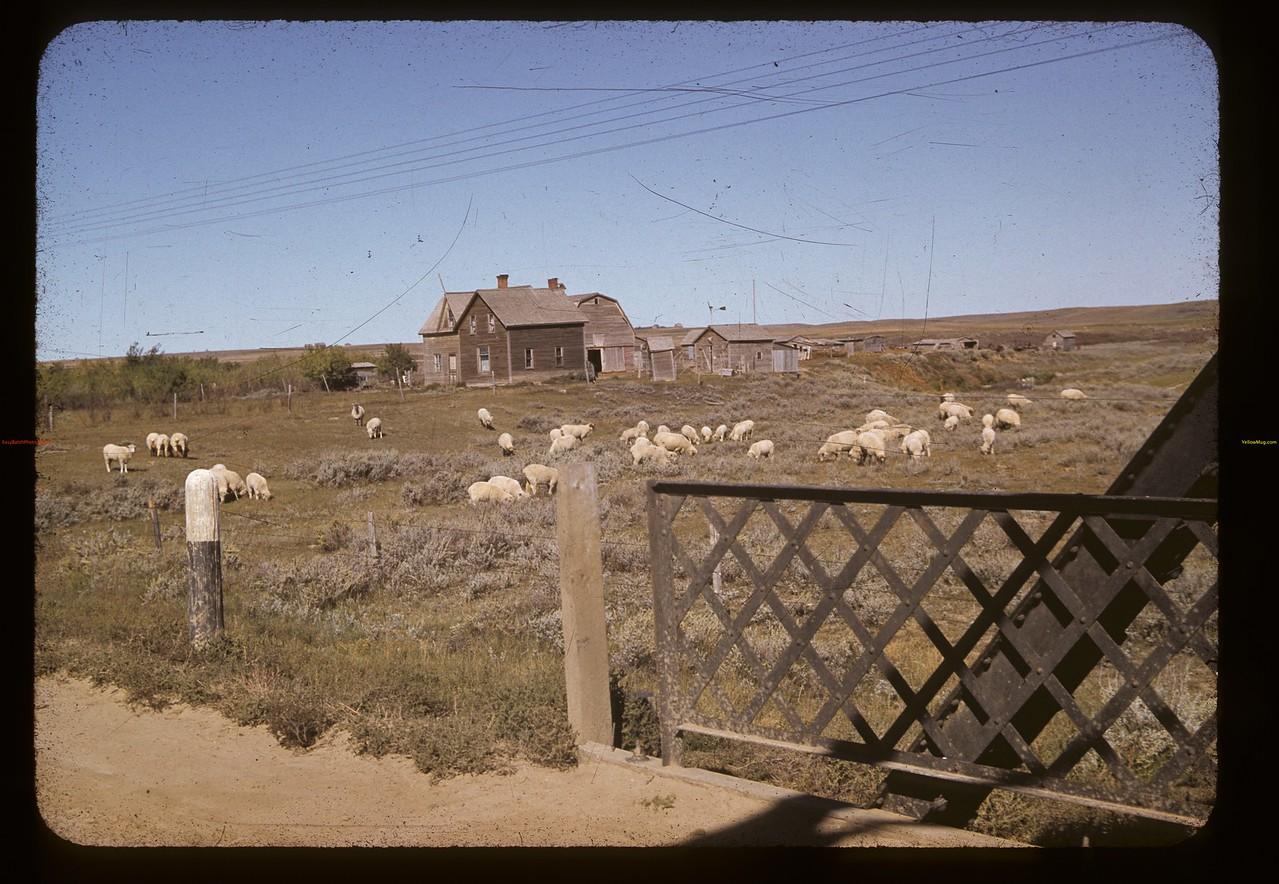 East of sheep Cadillac 09/12/1941
