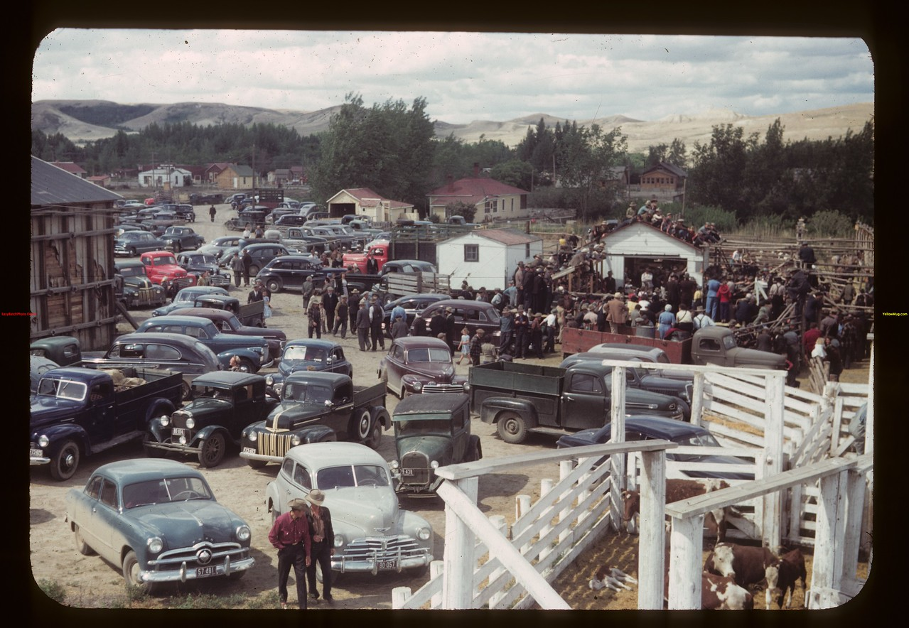 Cars at community stock sale. Eastend 06/01/1949