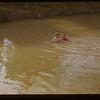 Swimming in the White Mud Knollys 07/18/1948