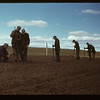Matador Co-op Farm . Veterans planting trees	 Matador	 05/15/1948