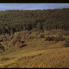 Effect of beaver lumbering	 Cypress Hills	 08/28/1948