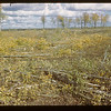 Brush cutter finished cutting - Naicam to Melfort	 Melfort	 09/25/1946