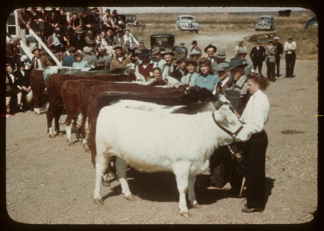 Juniors - North Battleford Fat Stock Show.  North Battleford.  05/21/1945