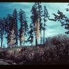 Jackpine forest - south end Beaver Bridge - Meadow Lake to Goodsoil Goodsoil 09/23/1944