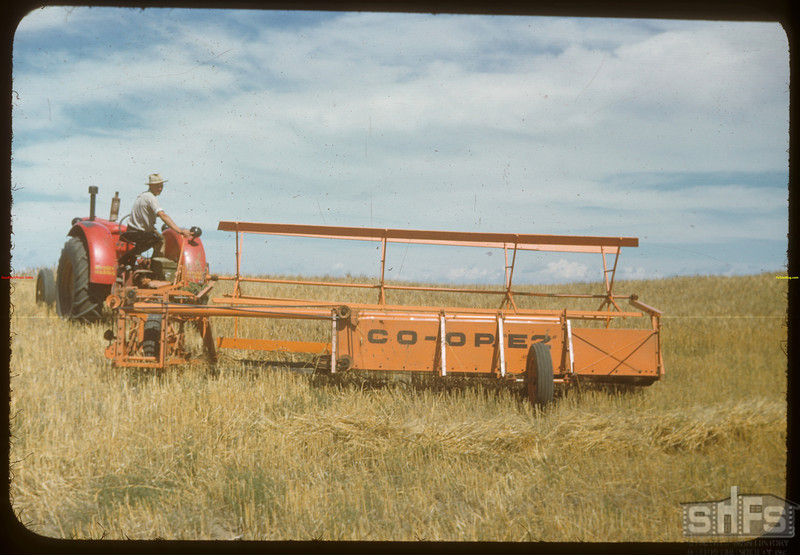 Orlan McKee swathing with co-op swather..  Mossbank.  08/16/1948