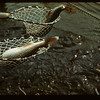 Spawning nets Makwa Narrows	 Loon Lake	 04/28/1944