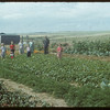 Mike Sand's family in garden..  Shaunavon.  08/24/1954