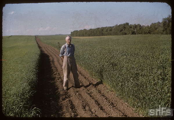 "R. P. Robbins ""1951 World Wheat King"" standing in a field. Shaunavon 07/19/1951"