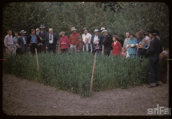 Test plot supervisors  visit Dick Robbins scotch oats.  Shaunavon.  07/27/1956